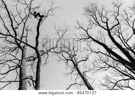 Leafless Dare Trees Over Sky Background. Black And White