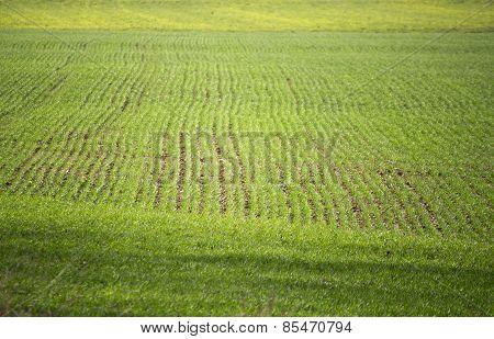 Cereal Crop Fields