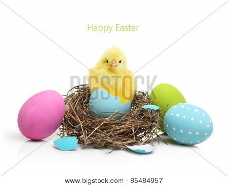 Cute little chicken coming out of the Easter egg in nest  isolated on white background