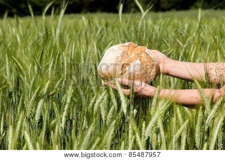 Grain To Bread