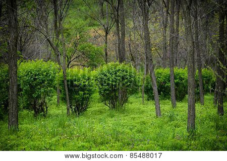 Forest Meadow Bushes