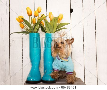Spring Doggy