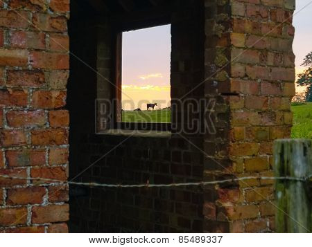 Cow standing in field as sun rises