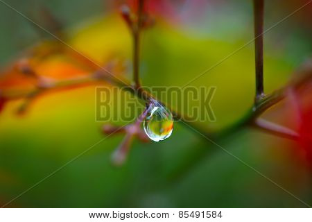 raindrop on a branch with colorful background