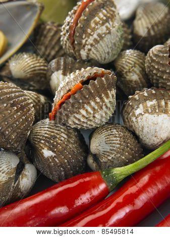 Close up of fresh clam