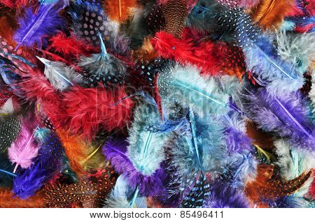 closeup of a pile of feathers of different colors