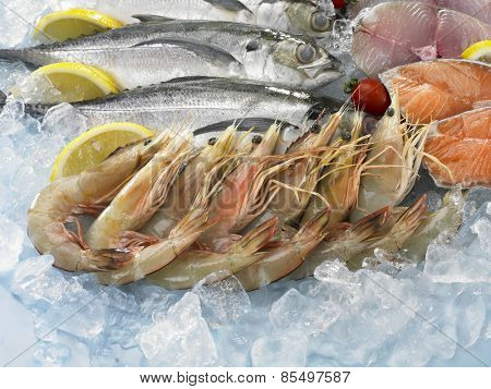 close up of the prawn on top of ice