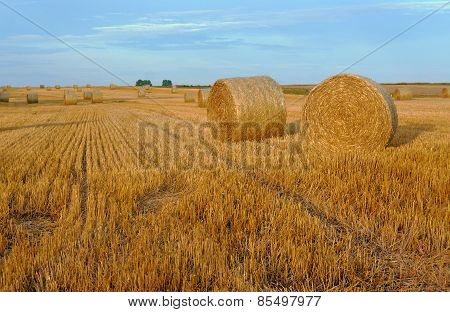 Stubble after harvest