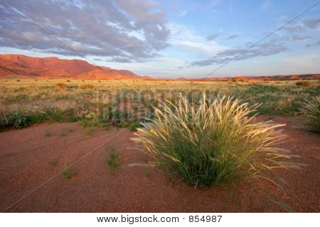Grassland landscape