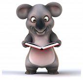 image of koala  - Fun koala - JPG