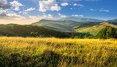 image of tall grass  - mountain summer landscape - JPG