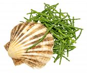 pic of marshes  - Fresh marsh samphire a coastal plant with vibrant green stalks and a crisp salty taste isolated on a white background - JPG