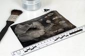 picture of criminology  - Disclosure of forensic evidence using fingerprint powders - JPG