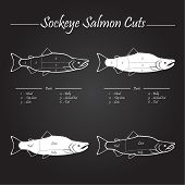 picture of redfish  - Sockeye Pacific salmon cutting diagram illustration white on chalkboard - JPG