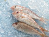 pic of red snapper  - red snapper fish on top of ice - JPG