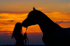 picture of horse girl  - Beautiful horse with girl silhouette on sunset - JPG