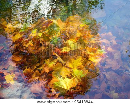 Golden maple leaves under a surface of small pond at an autumn park