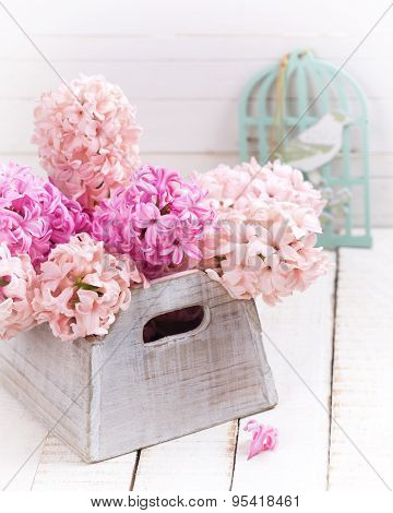 Tender Hyacinths In Box