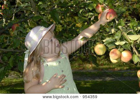 Annie Apple 446