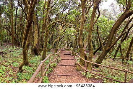 The amazing rain-forest in La Gomera, Parque Nacional de Garajonay, Canary islands, Spain
