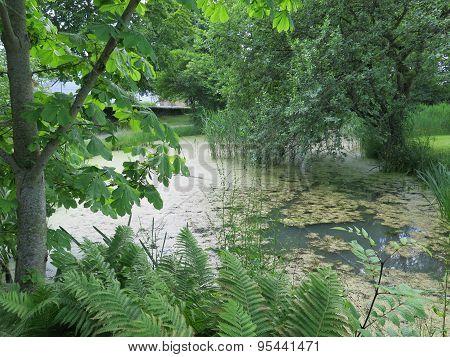 Duckweed Covered Lake