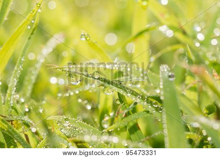 Dew drops in grass, brightly lit by morning sun