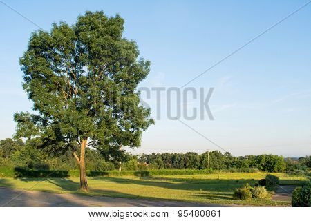 Big oak with copy-space on the sky
