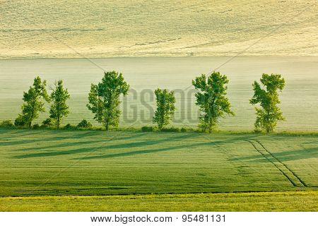 Moravian rolling landscape with row of  trees in morning. Moravia, Czech Republic