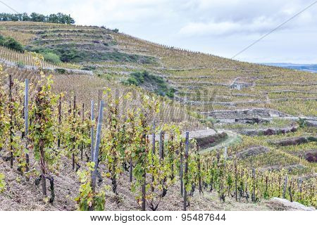 grand cru vineyard L�´Hermitage, Rhone-Alpes, France