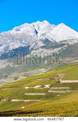 vineyards in Sion region, canton Valais, Switzerland