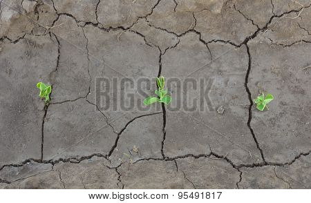 Sprouts in ground. Conceptual and agricultural scene.