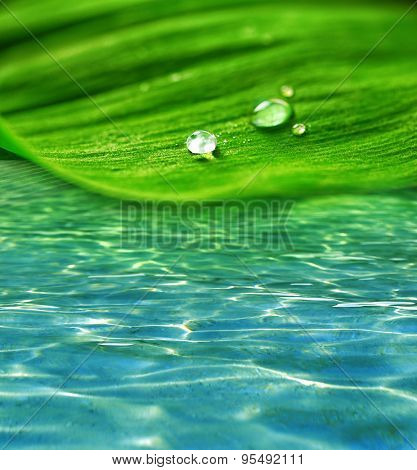 Green leaf with droplets on water background