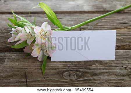 White Alstroemeria And Greeting Card