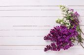 picture of violets  - Fresh white and violet lilac flowers on white painted wooden planks - JPG