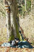 image of hunt-shotgun  - lying hunting dog with a weapon - JPG