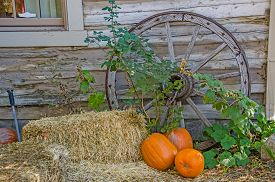 picture of wagon  - Antique wagon wheel leaning against a building with hay bales and pumpkins to create an autumn feel - JPG