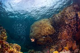pic of predator  - Underwater shot of the coral reef with fishes - JPG