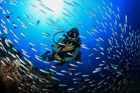 foto of biodiversity  - Scuba diving with fish on coral reef - JPG