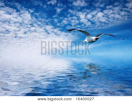 Blue sky and flaying seagull