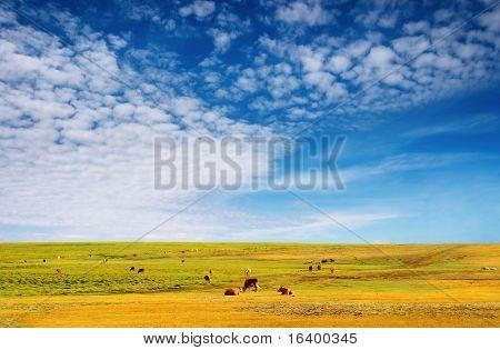 Pastoreo de vacas