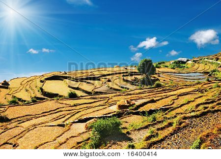 Rice fields on the mountainside, Himalaya, Nepal