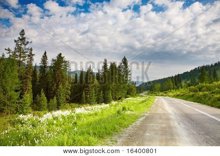 Landscape with forest and road