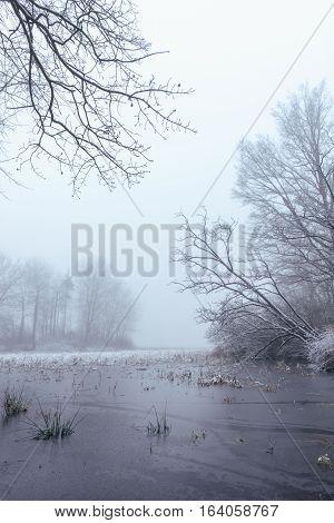 Frozen Pond In Foggy Morning