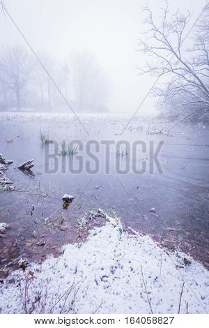 Frozen Pond With Few Trees In Foggy Morning