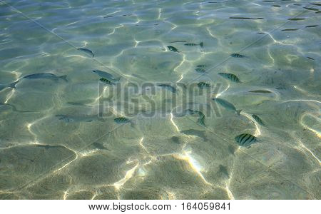 Fishes On Beach In Cancun, Riviera Maya, Mexico