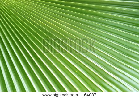 Flowers - Palm