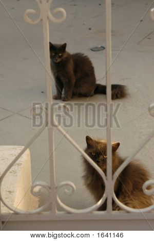 Two Sneaky Cats