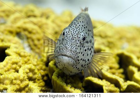 Portrait Of A Tropical Fish