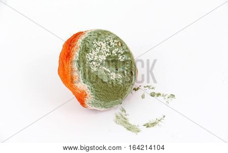 picture of a nasty rotten orange citrus