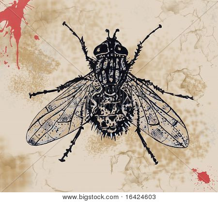 Abstract Painting Background With Fly